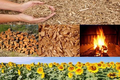 Risultati immagini per biomasse