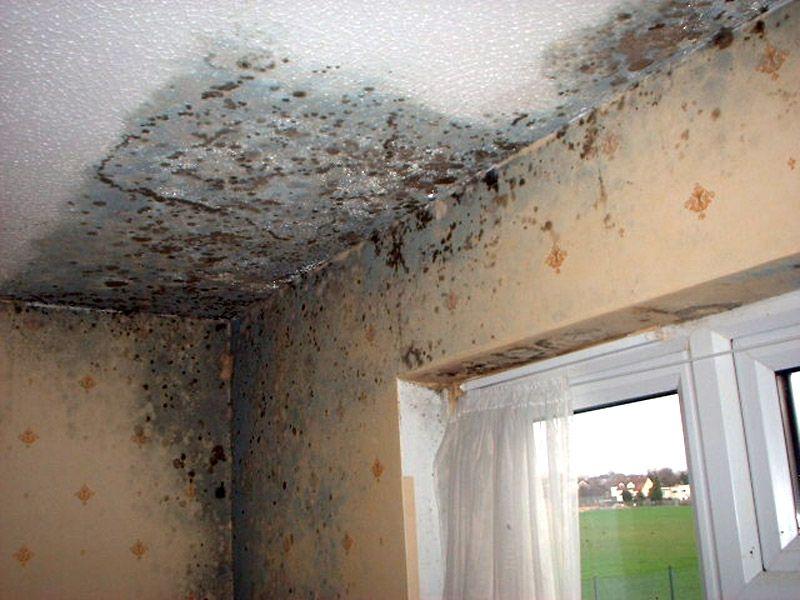 Pareti D Acqua Per Interni : Come eliminare lumidità la condensa e la muffa dalla propria casa